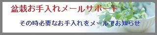 盆栽メールバナー-4.jpg